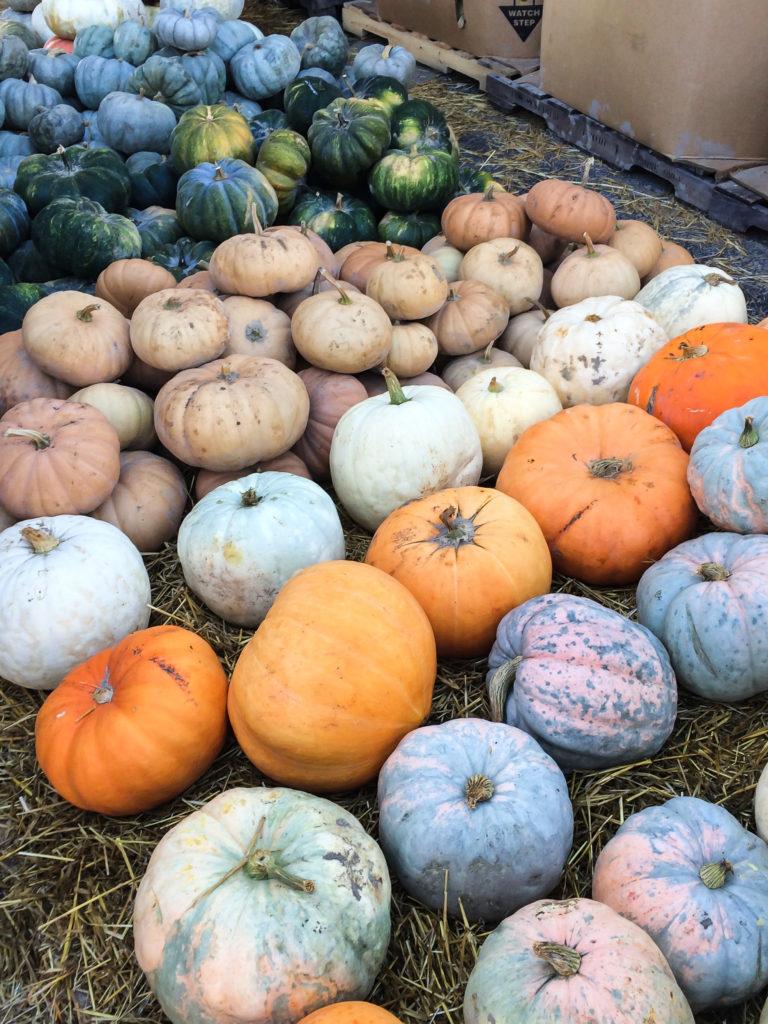 Farmers' Market October-5