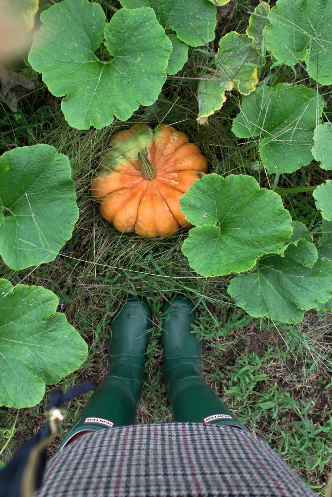 Pumpkin Picking-3