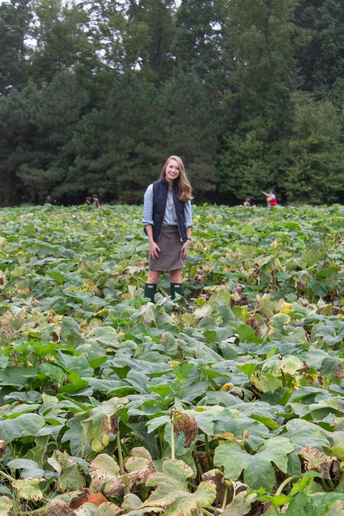 Pumpkin Picking-4