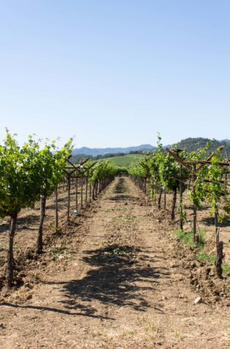 napa valley: wineries